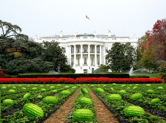 Watermelon_white_house